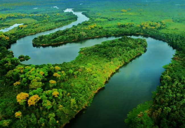 Brasil- Pasión Gastronómica y Vida Salvaje en el Sur