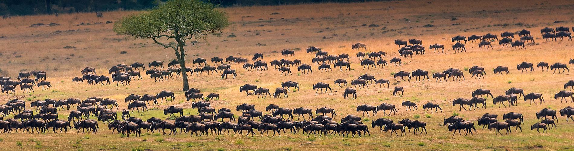 Tanzania El Sueño de África