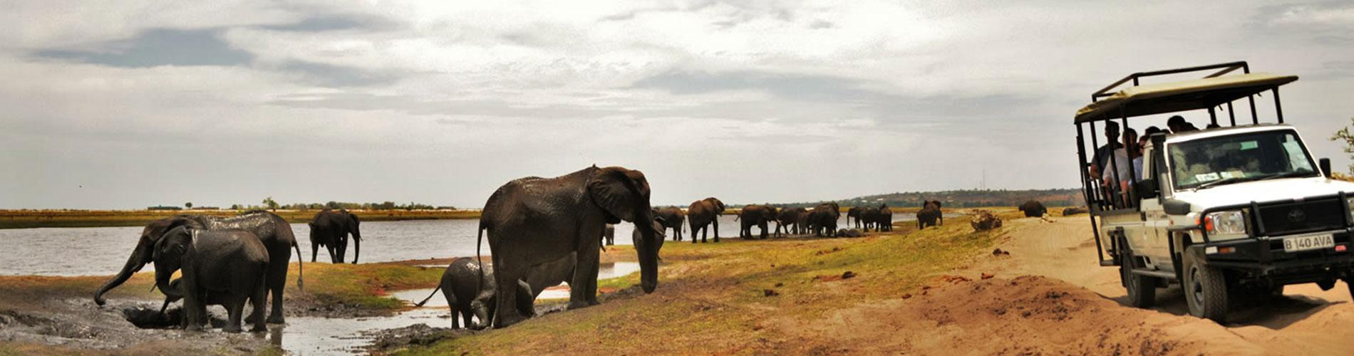 Tras la Senda de los Elefantes Zimbabwe, Botswana y  Cataratas Victoria