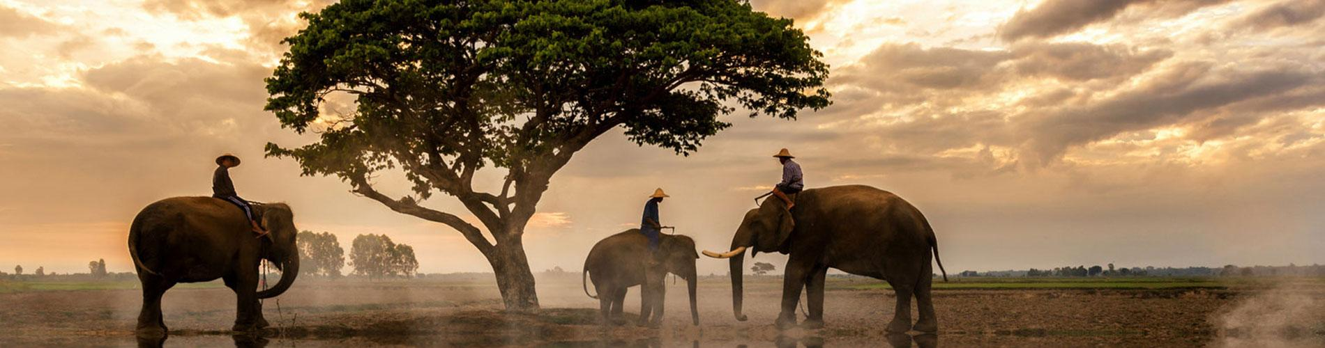 Safari Móvil de Lujo en el Norte de Botswana