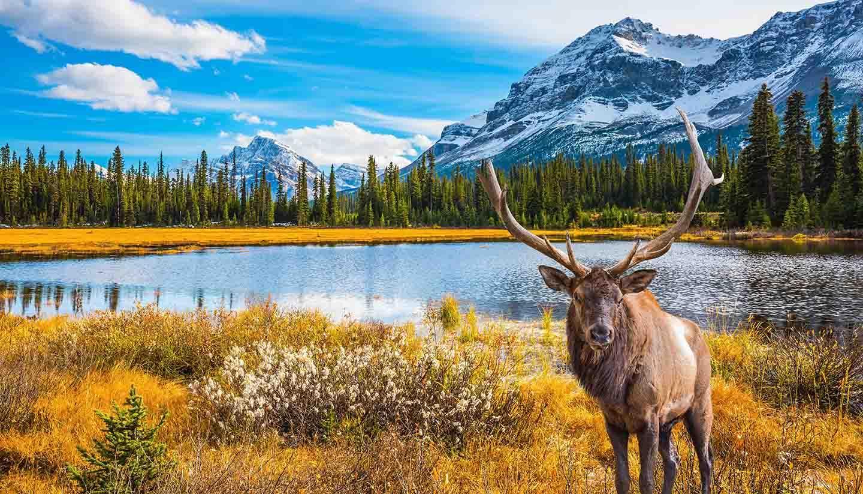 Ruta Rocky Mountain