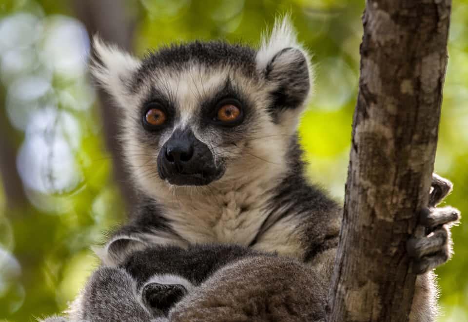 MADAGASCAR ESPECIAL SEMANA SANTA