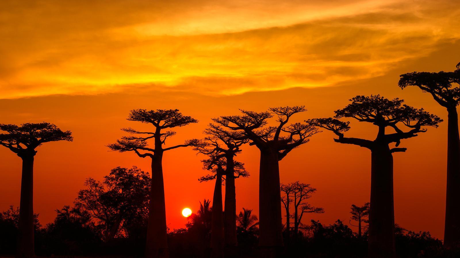 Madagascar, Esencias del Sur