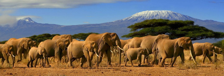 La Esencia de Tanzania